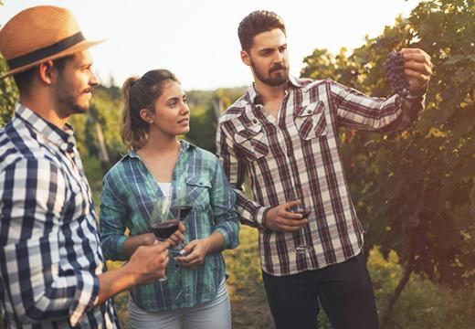 Friends in a vineyard learning about wine
