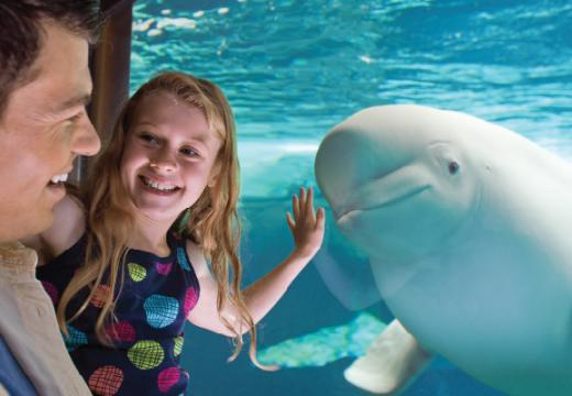 family with beluga whale